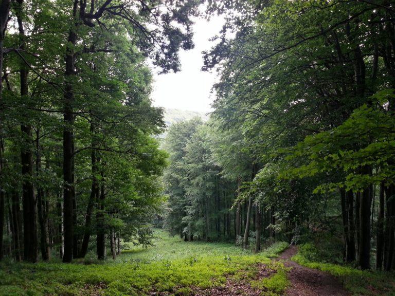 Nagy-Hideg-hegy,_Szokolya,_2624_Hungary_-_panoramio_(23)_kisebb